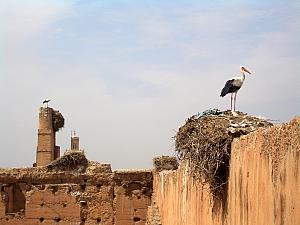 A group of storks have made their home atop the palace walls. Very cool.