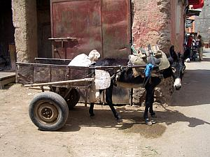 Typical street in the medina, another donkey cart.