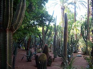Visting the Jardin de Majorelle (Majorelle Garden), designed by French artist in 1920s when Morocco was still a French colony.