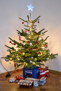 Munich, Germany - Ken and Jenna's little Christmas tree that could :)