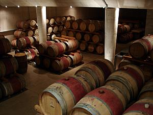 Cellar filled with oak barrels at the winery