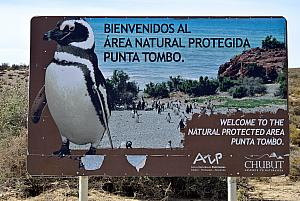 Visiting the Punta Tombo National Reserve - a protected area where hundreds of thousands of penguins use each summer to breed and raise their young.