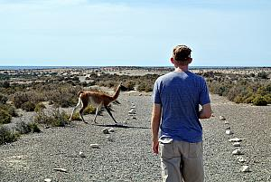 Punta Tombo - Guanaco Crossing.