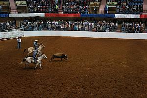 Fort Worth Rodeo and Stock Show - lassoing a calf
