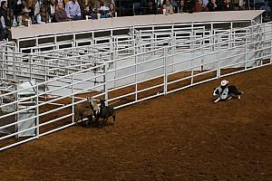 "Fort Worth Rodeo and Stock Show - look carefully -- that's a MONKEY riding on a border collie! No lie. Look up ""Whiplash rodeo monkey"" on youtube! Gold."