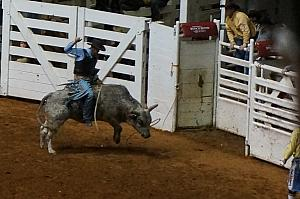 Fort Worth Rodeo and Stock Show - that bull looks MEAN!