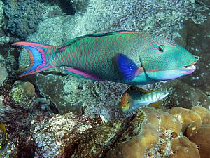 More underwater photos - borrowed from the Internets - the fish were incredibly colorful