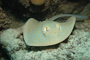 More of borrowed internet photos - Kelly saw a sting ray like this here. We were all jealous, but she swam away from it as fast as she could.