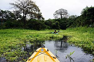 Kayaking through the marshlands.