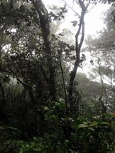 Definitely in the cloud forest. Looking down into a ravine, can only see dense white clouds.