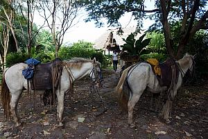 Wednesday, December 18: ready to go horseback riding through the rain forest and then to the beach.
