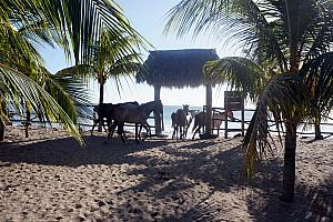 Sunday, December 22: As we walked back out to the beach, we were surprised to find a group of horses roaming the grounds.