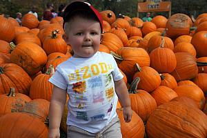 Cooper hanging with the pumpkins.