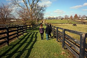 We visited Old Friends, a retirement home for retired racehorses in Georgetown, Kentucky. A beautiful place, and lots of fun stories about all the thoroughbreds!