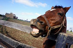This horse is hamming it up!