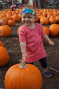 Capri in the pumpkin patch