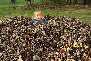 Playing in a big pile of leaves.