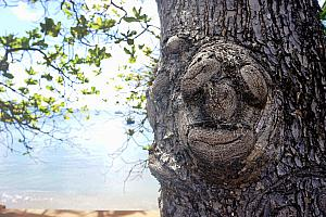 Funny face-looking knot in a ree
