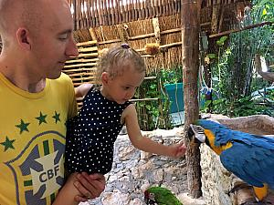 Capri feeding the toucan.